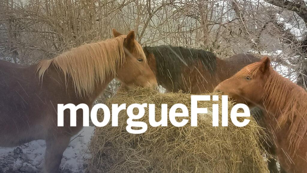 Morguefile Logo Wallpaper
